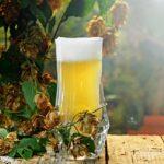 Il luppolo: ecco perché è così importante nella produzione della birra